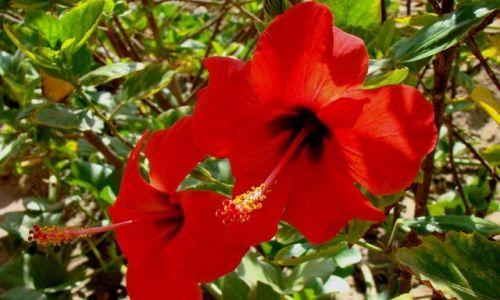 Zdjecie EGIPT / Marsa el Alam / Abu Daabab / Kwiaty Egiptu
