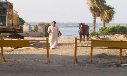 Zdjecie EGIPT / Dolina  Nilu / Luksor / Konik po kąpieli w Nilu