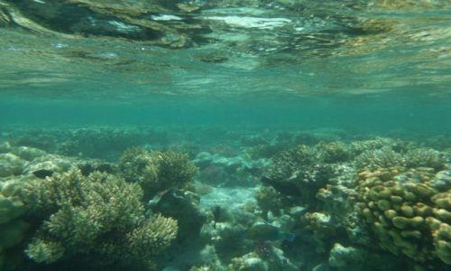 Zdjecie EGIPT / wschodni egipt / morze czerwone / Rafy koralowe