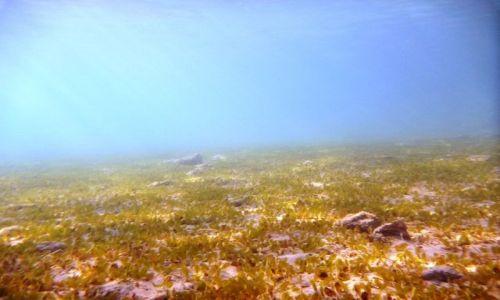 Zdjecie EGIPT / - / Hurghada / Morska łąka
