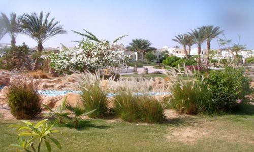 Zdjęcie EGIPT / SHS / Regency Plaza / Ogród
