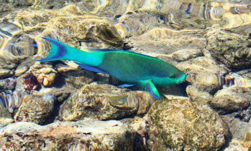 Zdjęcie EGIPT / Sharm El Sheikh / Morze Czerwone / Kolorowe rybki
