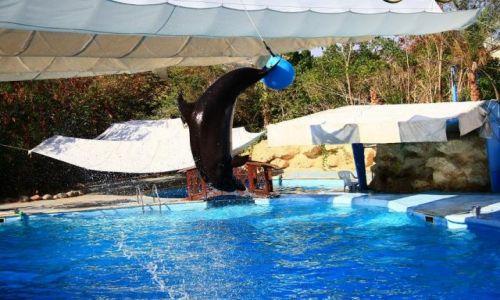 Zdjecie EGIPT / Sharm El Sheikh / Delfinarium / Tresura delfinów