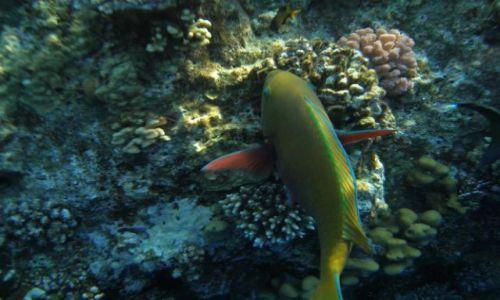 EGIPT / Sharm / Morze Czerwone / Kolorowa:)