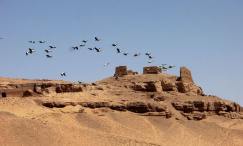 Zdjecie EGIPT / Luksor / piaski i niebo nad Nilem :) / Lot ptak�w