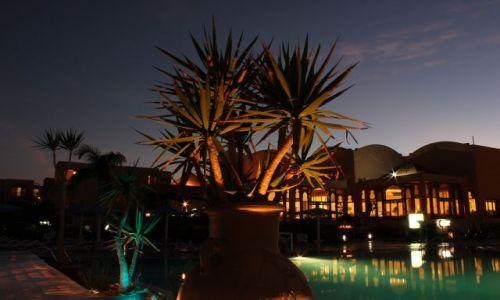 Zdjęcie EGIPT / Hurgharda / alibaba resort / kolorowe kaktusy