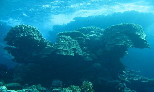 Zdjecie EGIPT / Morze czerwone / St.Johns / U stóp pustyni