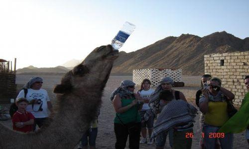 Zdjecie EGIPT / - / Wioska Beduińska / Żłopacz