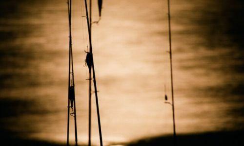 Zdjecie EGIPT / brak / Jez. Nassera / Śpiące wędki nad Nilem w świetle księżyca