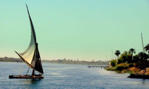 Zdjecie EGIPT / - / Luxor / Nad Nilem 5
