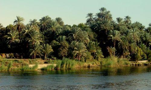 Zdjecie EGIPT / - / Luxor / Nad brzegami Nilu 2