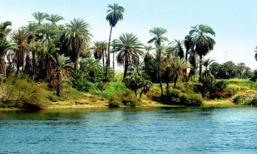 Zdjecie EGIPT / - / Luxor / Nad brzegami Nilu 3