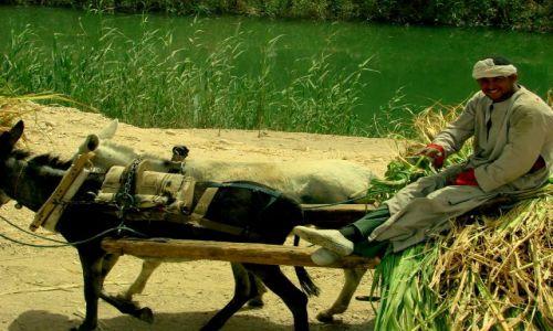 Zdjecie EGIPT / - / Luxor / Zwózka trzciny cukrowej