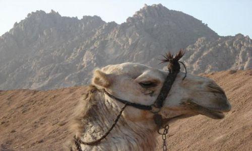 Zdjecie EGIPT / Sharm / Sharm  / Profil