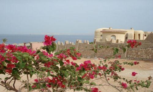 Zdjecie EGIPT / Sharm / Sharm  / Plaża zza kwiatów