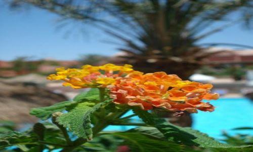 Zdjecie EGIPT / Sharm / Sharm  / Kwiatek