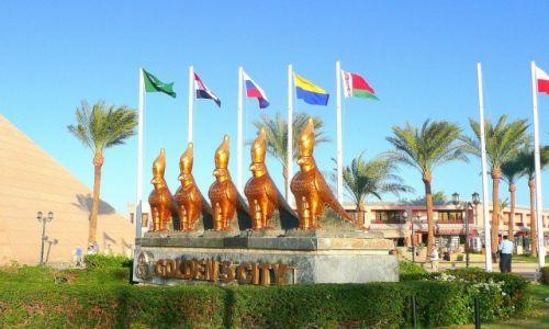 Zdjecie EGIPT / Hurghada / nowa Hurghada / ptaki złotego miasta