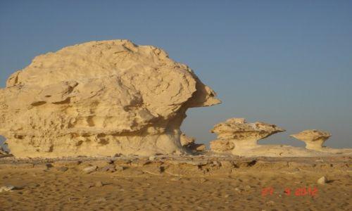 Zdjecie EGIPT / Bawiti / Biała Pustynia / Biała Pustynia