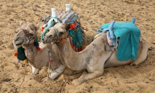 Zdjęcie EGIPT / Aglomeracja Kairu / Giza / Chwila wytchnienia
