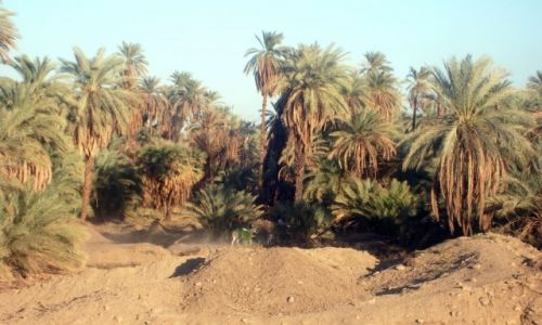 Zdjecie EGIPT / gdzieś tam... / Nil / ...