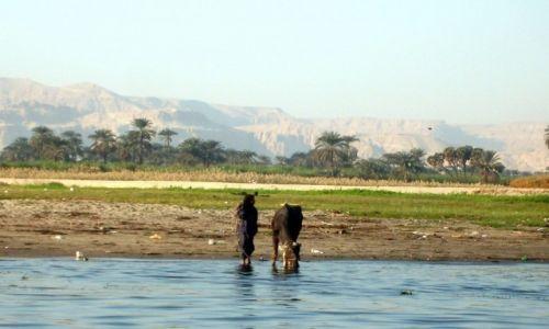 Zdjęcie EGIPT / Nil / gdzieś tam... / Pani z krową