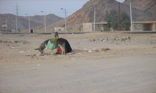 Zdjecie EGIPT / Luxor / pustynia / Pustynia?