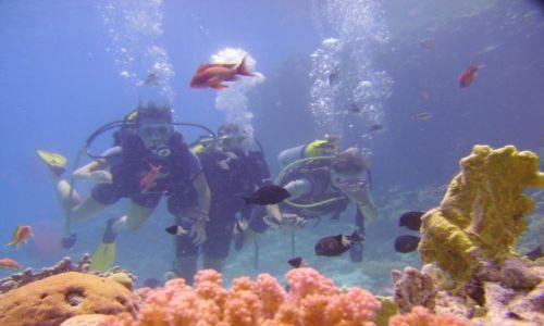 Zdjęcie EGIPT / Hurgada / Giftun / Podwodny świat