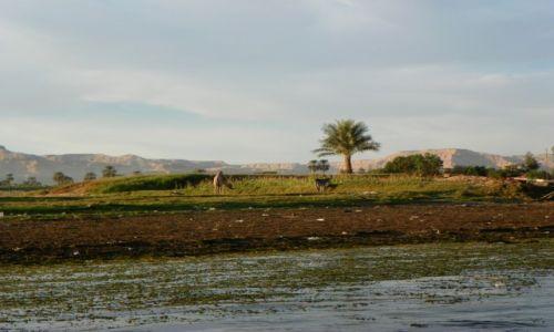 Zdjecie EGIPT / Nil / Luxor / Konkurs