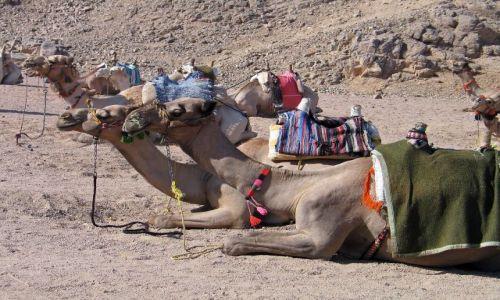Zdjecie EGIPT / brak / Hurgada- / Zmęczeni