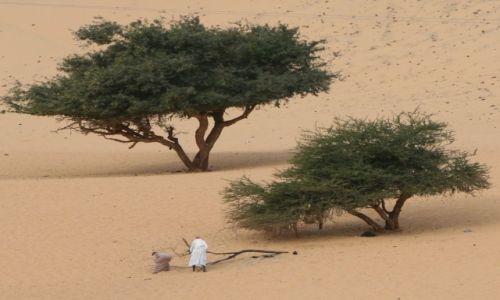 Zdjecie EGIPT / Asuan / Nad Nilem / Zbieracze drewna