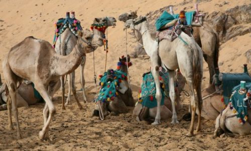 Zdjęcie EGIPT / Asuan / Wioska Nubijska / Narada przed wyprawą