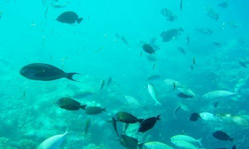 Zdjęcie EGIPT / marsa el alam / marsa el alam / coral reef