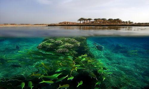 EGIPT / Marsa Alam / Marsa Alam / underwater