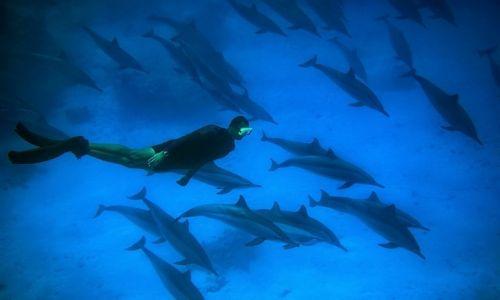 Zdjęcie EGIPT / Marsa Alam / Marsa Alam / wśród delfinów ...