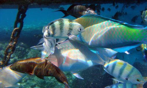 Zdjęcie EGIPT / Synaj     / Morze Czerwone / Podwodny swiat