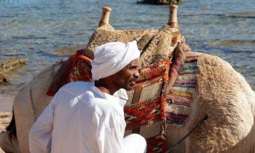 Zdjęcie EGIPT / Sharm el Sheikh / Shark bay / Nad Morzem Czerwonym