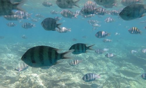 Zdjecie EGIPT / okolice Hurghady / Morze Czerwone / podwodny świat