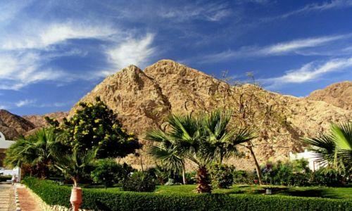 Zdjęcie EGIPT / Synaj / okolice Taby /  Na Synaju