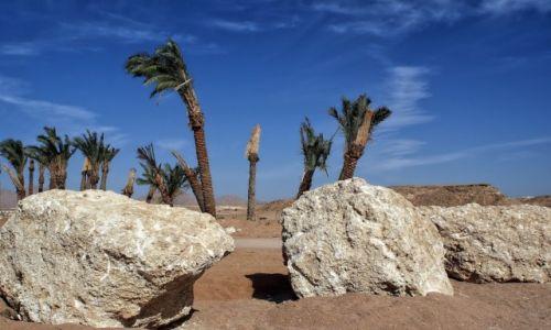 Zdjecie EGIPT / Synaj / Sharm el Sheikh / Synaj
