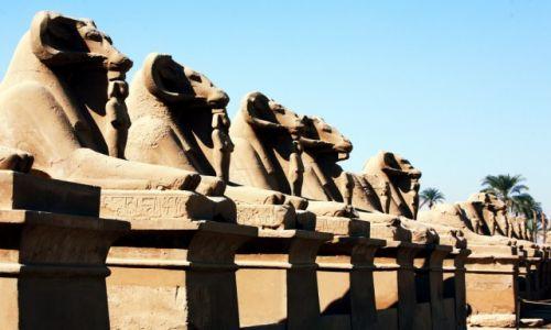 EGIPT / Górny Egipt / Karnak, świątynia Amona-Re / Aleja sfinksów