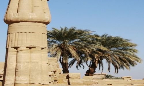 EGIPT / Górny Egipt / Karnak, świątynia Amona-Re / Palmy w ruinach