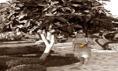 Zdjecie EGIPT / - / Hurghada / Egzotyczne ogrody