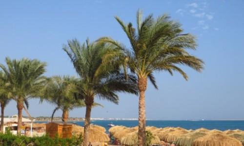 Zdjęcie EGIPT / Pustynia Arabska / Safaga / wspomnienie lata