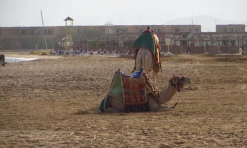 Zdjęcie EGIPT / Pustynia Arabska / Safaga / propozycja przejażdżki