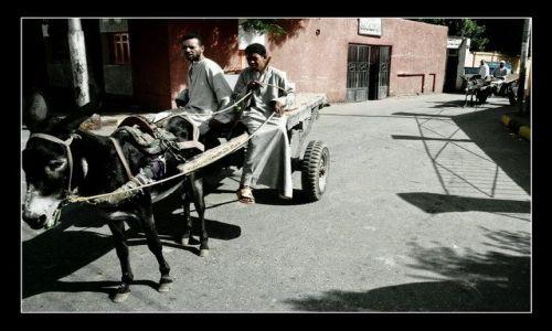 Zdjecie EGIPT / brak / Edfu / Donkey King