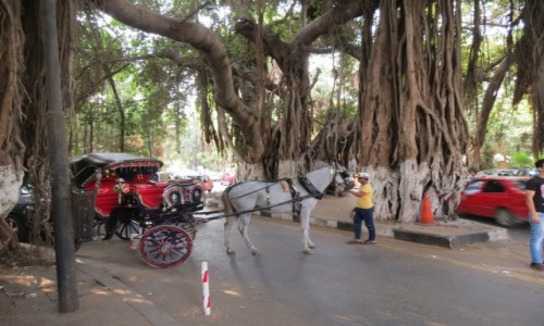 EGIPT / Kair  / Zamalek / Baobab