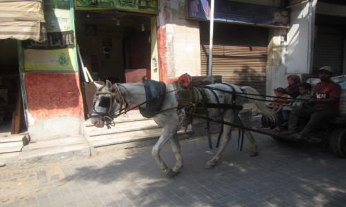 Zdjecie EGIPT / Kair / Kair / Popularny transport