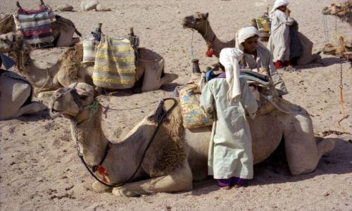 Zdjecie EGIPT / Kair / gdzieś potpatrzone / postój