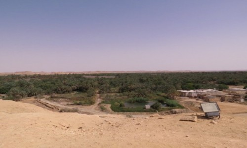 EGIPT / Afryka / Kair / siwa 1000 palmm