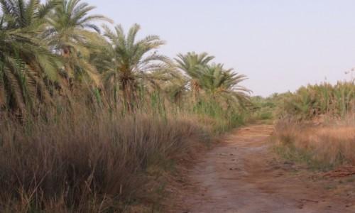 EGIPT / Afryka / Kair / siwa droga palm